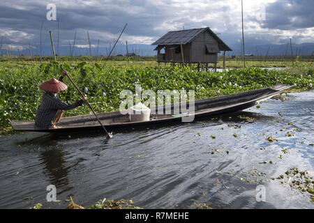 Myanmar, Shan State, Taunggyi District, Inle Lake, floating gardens - Stock Photo