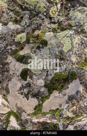 A close up of moss and lichen on the side of a large rock in eastern Washington. - Stock Photo