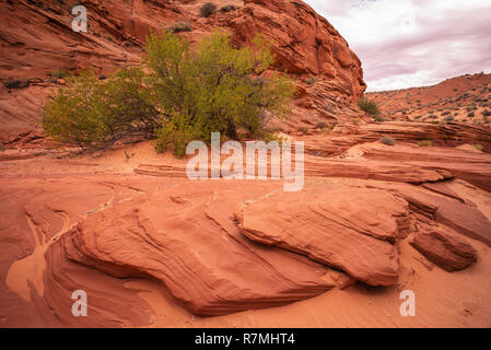 Waterhole Canyon - a slot canyon caused by flash flooding, cutting through the red Navajo sandstone rocks near Page, Arizona, USA - Stock Photo