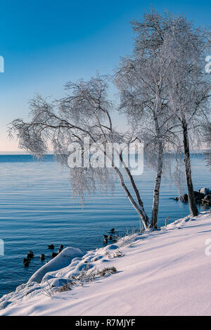 Ice covering tree branches after a freezing rain by Lake Ontario. - Stock Photo