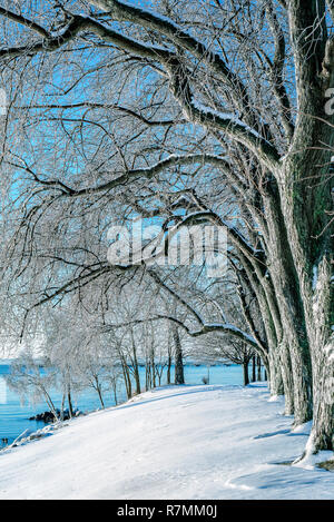 Tree branches covered with shield of ice in a winter morning by Lake Ontario caused by temperature plunging after a rainy night. - Stock Photo