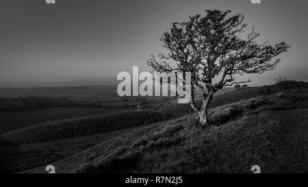 Wind swept tree in black and white at Farthing Common on the North Downs Way Kent Countryside - Stock Photo