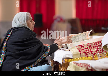 A devout Sikh woman reads from the holy book, the Guru Granth Sahib, at the main altar at a temple in Richmond Hill, Queens, New York City. - Stock Photo