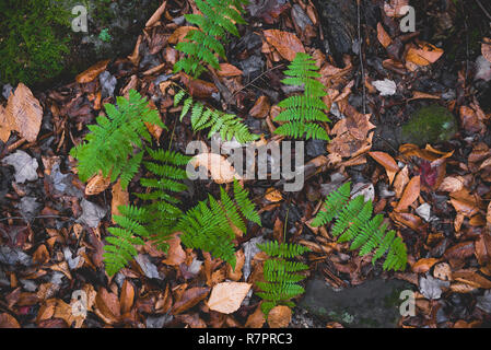 Fall scenes during a hike at Hunter Mountain in New York State. - Stock Photo