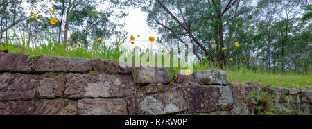 The Convict Trail or Great Northern Road near Bucketty, in the Hunter Valley, NSW, Austrialia - Stock Photo