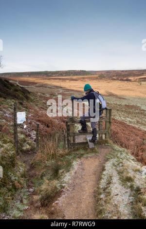 A female walker on Levisham Moor in the North York Moors - Stock Photo