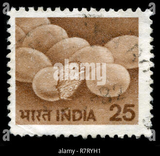 Postage stamp from India in the Agriculture series issued in 1979 - Stock Photo