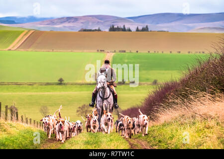 Yetholm, Kelso, Scottish Borders, UK. 8th December 2018. The Duke of Buccleuch Hunt meet at Mainhouses near the Borders town of Kelso, proceeding to f - Stock Photo