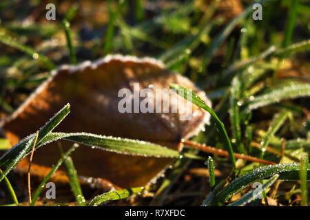 Frozen and frost-covered leaves on an early winter morning, close view. - Stock Photo