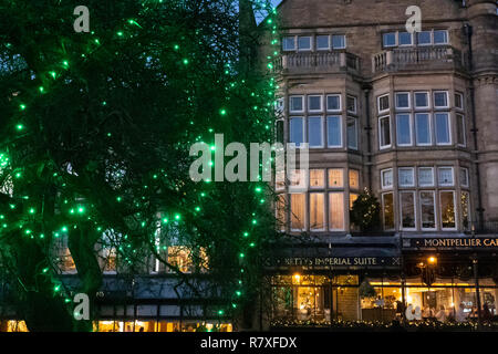 Green lights hanging from a tree with Betty's Tea Rooms in the background,Harrogate,North Yorkshire,England,UK. - Stock Photo