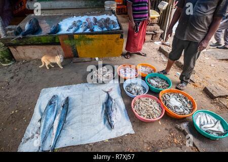 Inde, state of Kerala, Kochi (or Cochin), Fort Kochi (ou Fort Cochin) district, fish market - Stock Photo