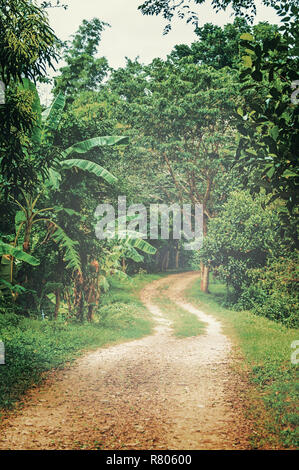 Foggy morning. Dirt road in the jungle. Dry season. - Stock Photo