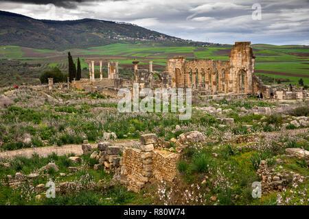 Morocco, Meknes, Volubilis Roman city, wild flowers growing amongst ruins - Stock Photo