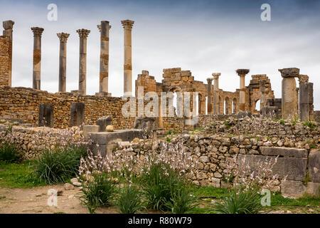 Morocco, Meknes, Volubilis Roman site, Basilica and pillars of the Capitol - Stock Photo