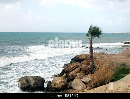 Landscape with alone palm tree growing on stony coast in front a stormy sea with waves break about the empty wild beach against the cloudy sky on over - Stock Photo