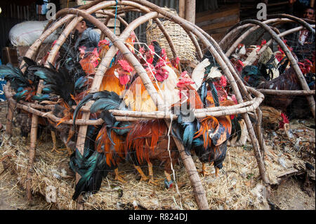 Chickens in a basket, market street scene, Mercato of Addis Ababa, Addis Ababa, Oromia Region, Ethiopia - Stock Photo