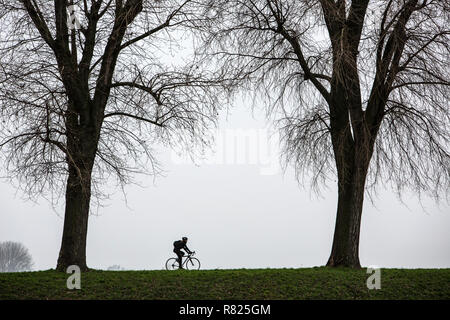 Cyclist, dreary winter weather, fog, bare trees, bei Stockum, Dsseldorf, North Rhine-Westphalia, Germany - Stock Photo