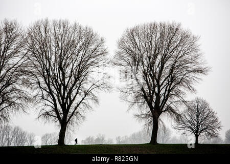 Dreary winter weather, fog, bare trees, bei Stockum, Dsseldorf, North Rhine-Westphalia, Germany - Stock Photo