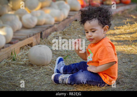 A boy toddler sets next to a white pumpkin on a hay-covered ground. In front of the cute boy are pallets of white and orange pumpkins. - Stock Photo
