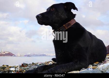 Big black dog lies on the seashore and looks thoughtfully towards the sea. Far East of Russia, Vladivostok - Stock Photo