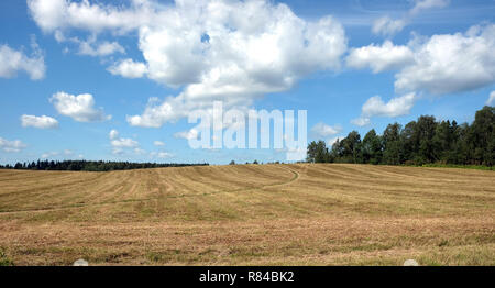 Beautiful rustic landscape with ground road runs through a mowned field under sky with clouds to the forest on sunny summer day - Stock Photo