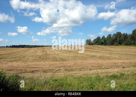 Beautiful rustic landscape with countryside ground road runs through a mowned field under sky with clouds to the forest on sunny summer day - Stock Photo