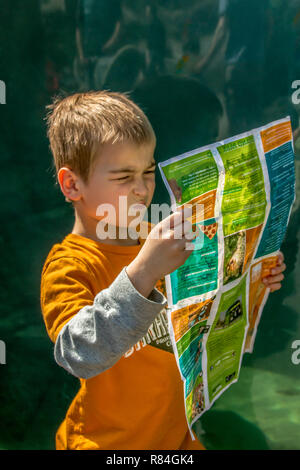 Seattle, Washington, USA.  Six year old boy looking very confused as he tries to figure out where he is on the map at Woodland Park Zoo.  (MR) - Stock Photo