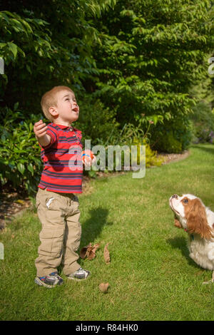 Issaquah, Washington, USA.  Two year old boy and Mandy, a Cavalier King Charles Spaniel dog, looking up and waiting for at a ball that he through up i - Stock Photo