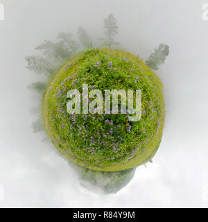 Field of willow-tea on a cloudy day. Spherical 360-degree vr panorama. Tiny planet 360vr panorama - Stock Photo