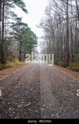 A leaf covered path trails off in the distance through trees in a public park - Stock Photo