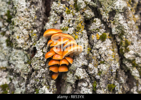 Mushrooms and moss growing on a tree in December - Stock Photo