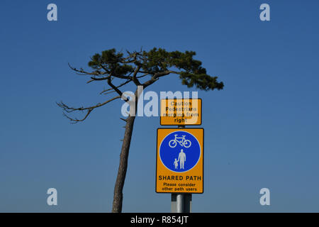 Information sign against a blue sky with a scots pine tree Odd location. devon , England.UK. - Stock Photo