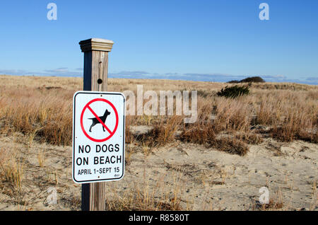 No Dogs on Beach sign mounted to post by the dunes at Scusset Beach in Sagamore, Bourne, Cape Cod, Massachusetts USA - Stock Photo