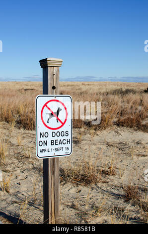 No dogs on beach sign posted by sand dunes at Scusset Beach Cape Cod, in Sagamore, Bourne, Massachusetts USA - Stock Photo