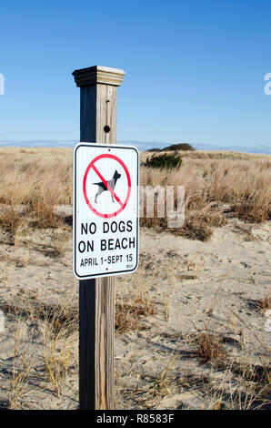 No dogs on beach sign posted by dunes at Scusset Beach, Cape Cod in Sagamore, Bourne, Massachusetts, USA - Stock Photo