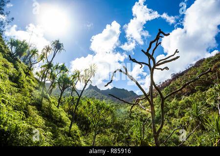 Looking up one of the valleys along the Na Pali coast while hiking the Kalalau trail, Kauai, Hawaii, USA. - Stock Photo