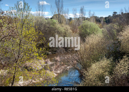 Riparian forest next to the river Manzanares, in El Pardo, Madrid, Spain - Stock Photo