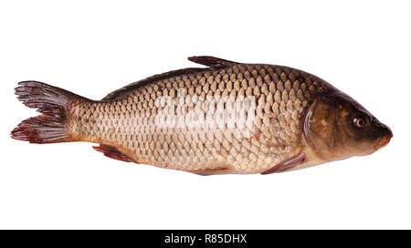 Fresh raw fish isolated on white background - Stock Photo
