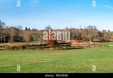 Part of RHS garden at Hyde Hall in the winter including the lake. - Stock Photo