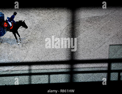 Prague, Czech Republic. 13th Dec, 2018. Global Champions League show jumping contest Nr. 1 - Czech Equestrian Team in Prague, Czech Republic, December 13, 2018. Credit: Roman Vondrous/CTK Photo/Alamy Live News - Stock Photo