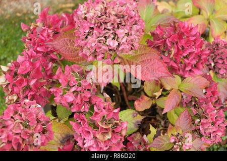 Herbst im Garten - Stock Photo