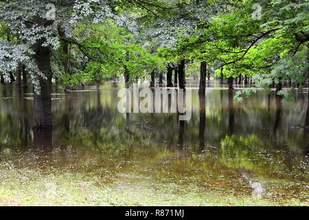 Flooded park during a flood in Magdeburg in Germany - Stock Photo
