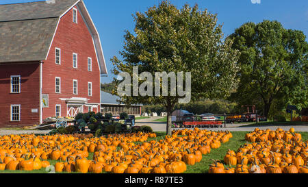 rural farm with holiday pumpkins for sale out on the lawn in october - Stock Photo