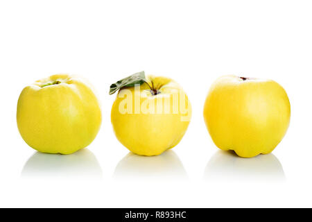 Fresh quinces isolated on white background - Stock Photo