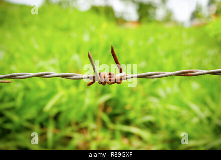 barbed wire on outdoors / close up of old barbed wire with rust for fence on blur green field nature background  - wire thorn - Stock Photo