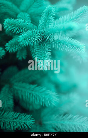 young fluffy spruce, close-up with smooth bokeh. - Stock Photo