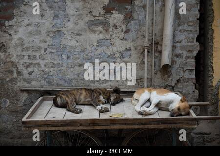 Two dogs sleeping on a wooden push cart in New Delhi, India. - Stock Photo