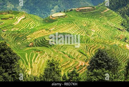 Longsheng or Longji Rice Terrace (Dragon's Backbone) Guilin, Guangxi, China - Stock Photo