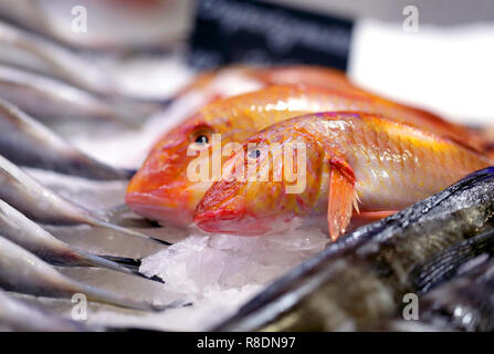 Bright photo background macro of a big red fish wold on the counter - Stock Photo