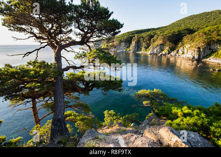 Pine-tree on a rock at the sea in the morning light - Stock Photo